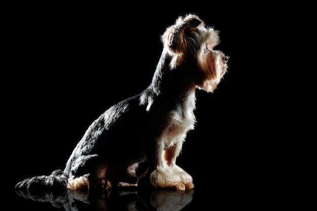 Silhouetprofiel van een zittende hond