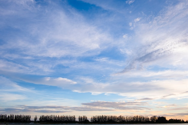 Silhouetrol van pijnboom met blauwe wolkenhemel, landschapsconcept.