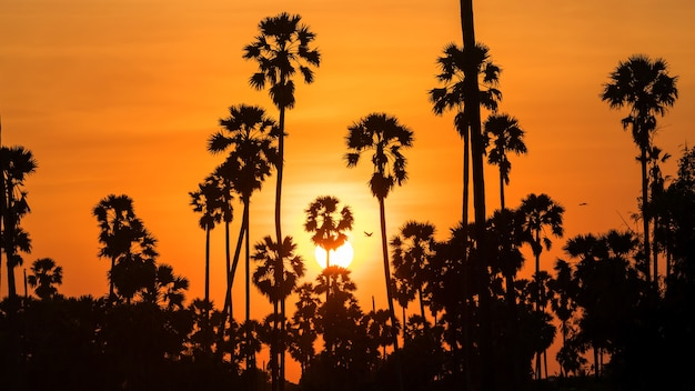 Silhouetsuikerpalmen en vliegende vogels bij zonsondergang. landbouw en natuurlijke achtergrond.