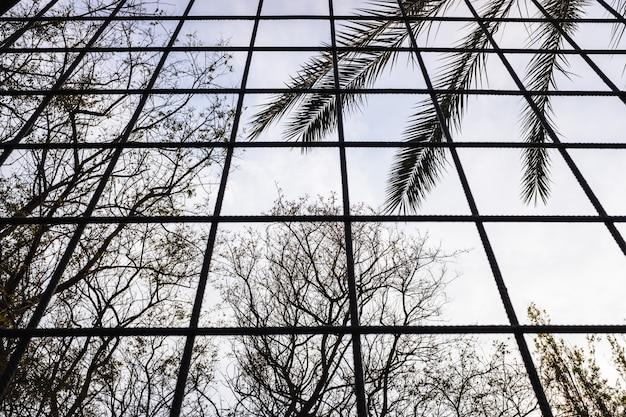 Silhouetten van bomen die uit een gevangenis groeien, zie je door tralies van mensen die hun vrijheid zijn ontnomen.