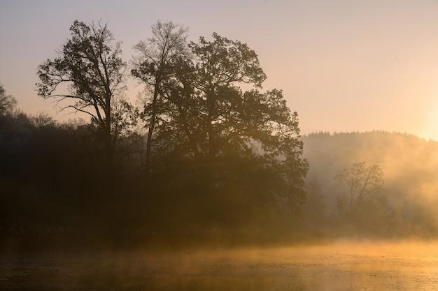 Silhouetten van bomen op een mistige mistige ochtend aan de oever van het meer in europa. mooie sfeer bij herfstzonsopgang in het wild