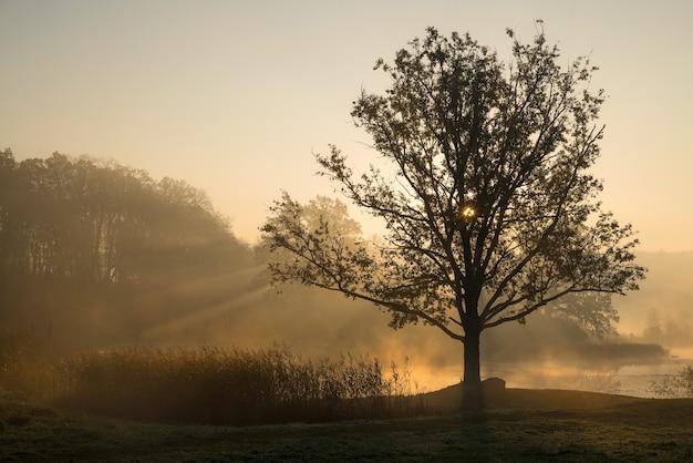 Silhouetten van bomen op een mistige mistige ochtend met zonnestralen die door de boomtakken komen.