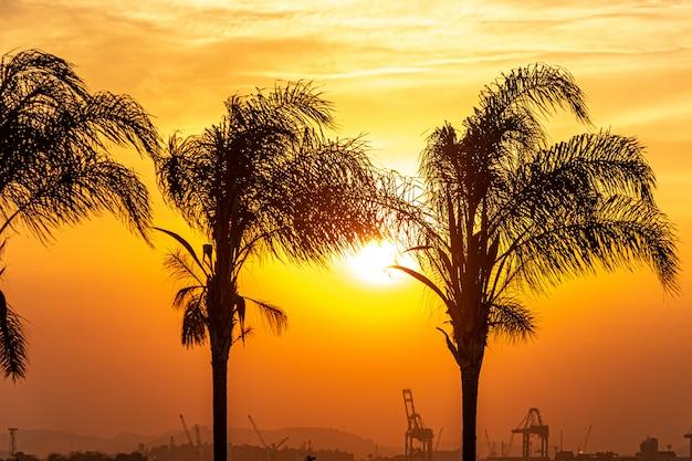 Silhouetten van kokospalmen in het havengebied van rio de janeiro.