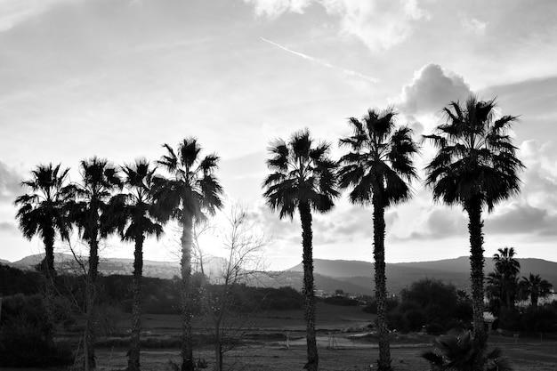 Silhouetten van palmbomen rij op zonsondergang
