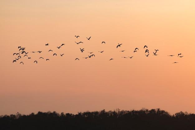 Silhouetten van vogels die met zonsonderganghemel vliegen gaan naar huis