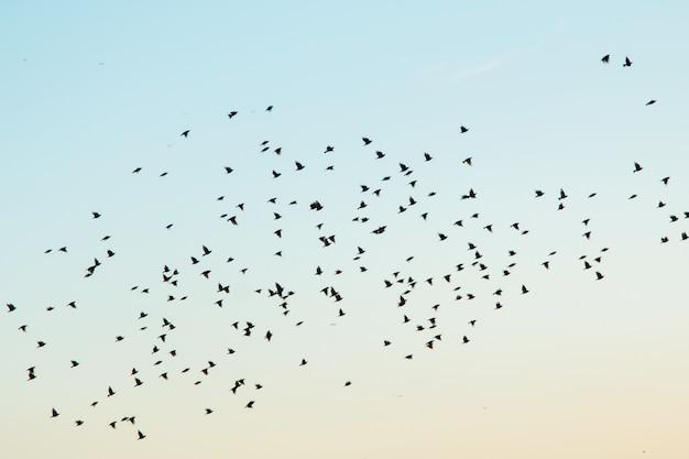 Silhouetten van vogels in de lucht