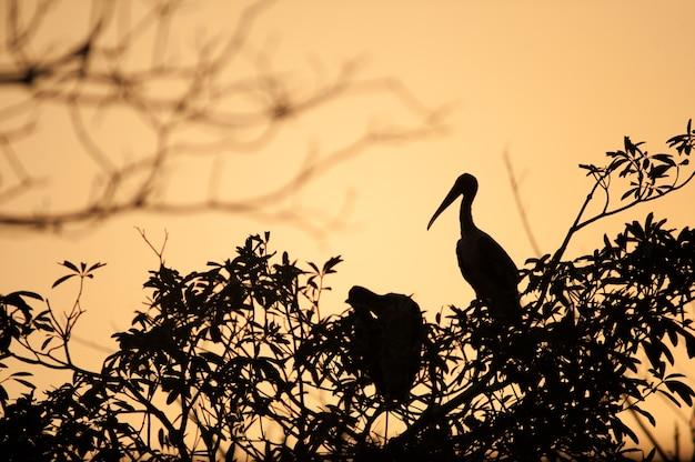 Silhouetvogel op tak op zonsondergang