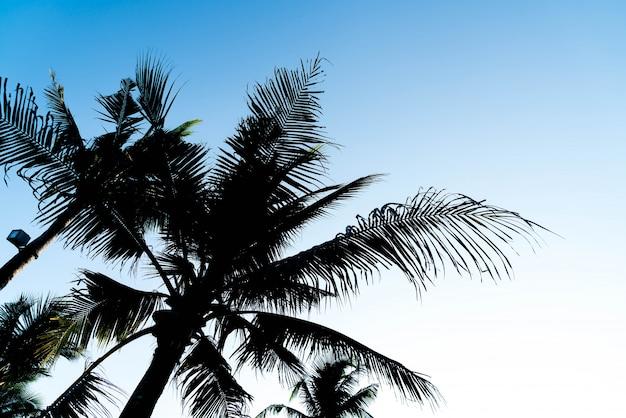 Sillhouette palmbomen