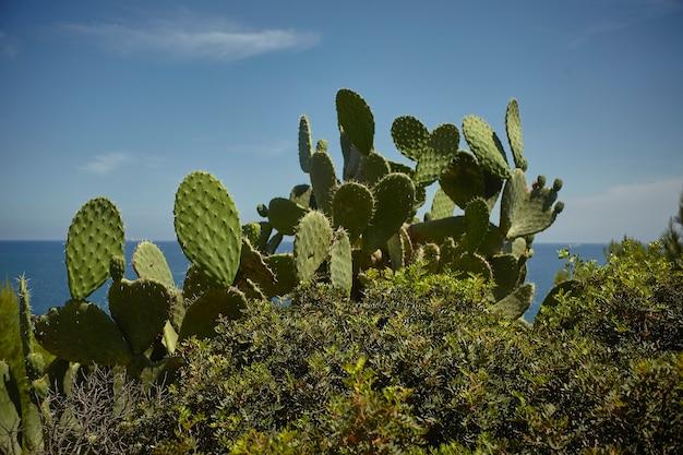 Silouette van enkele stekelige peren gedoopt in de mediterrane vegetatie met de achtergrondhemel.