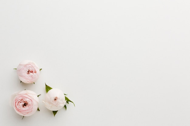 Simplistische roze en witte rozen en kopie ruimte achtergrond