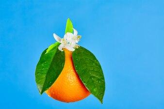 Sinaasappelen met oranjebloesembloemen op blauw