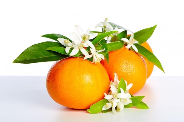 Sinaasappelen met oranjebloesembloemen op wit