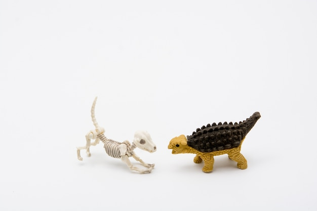 Skeleton hond en ankylosaurus, vriendrelatie