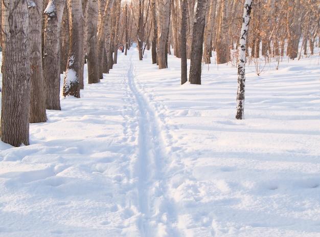Skispoor op sneeuw in de winterpark voor sporten