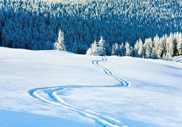 Skispoor op sneeuwoppervlak en winterbergsparrenbos erachter.