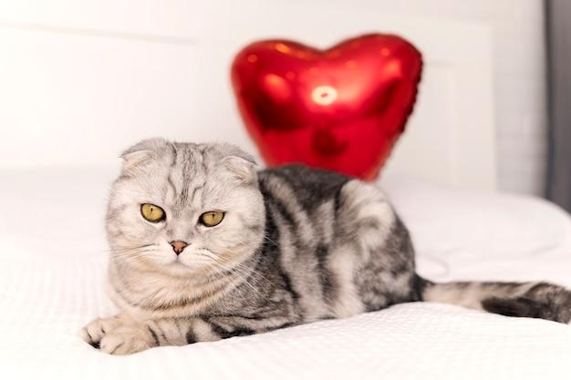 Slaapkamer is ingericht voor valentijnsdag, volbloed scottish fold-kat zit op bed en speelt met hartvormige ballon.