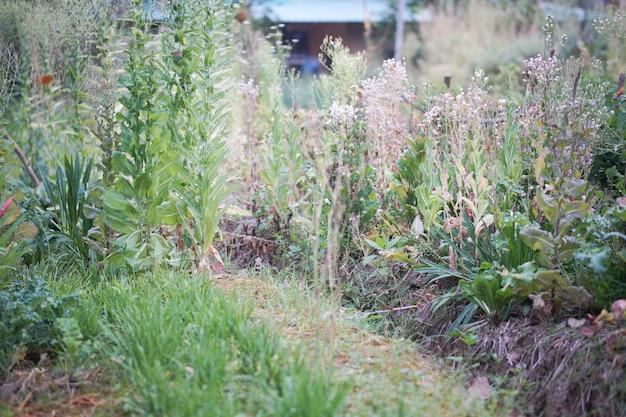 Slagroenteteelt in tuinboerderij voor het verzamelen van zaden