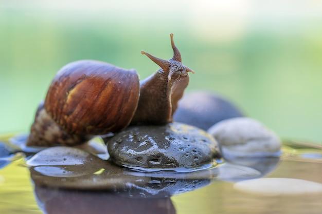 Slak in een schelp kruipt op een keramische pot met water, zomerdag in de tuin