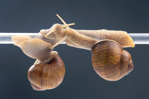 Slakken hangen aan een plastic buis
