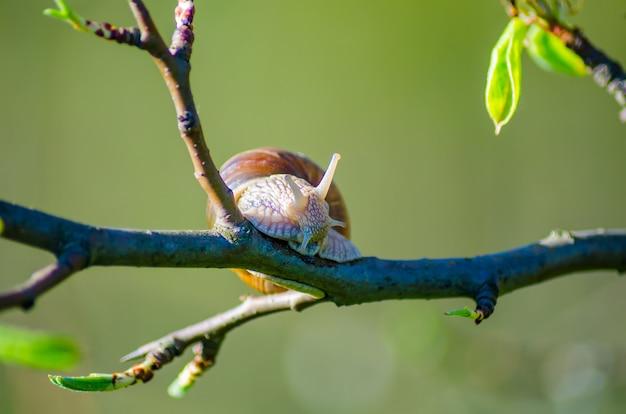 Slakken kruipen langs fruitbomen.