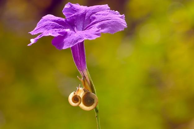 Slakken op een paarse bloem