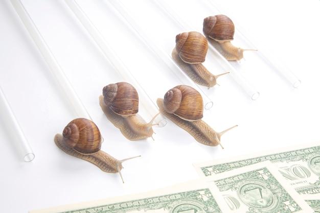 Slakken rennen met geld naar de finish. doorbraak en doorzettingsvermogen in het bedrijf.