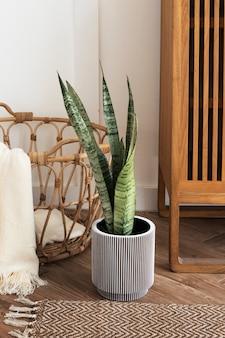 Slangenplant in een grijze plantenpot op een houten vloer