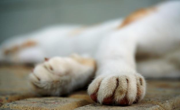 Slapende kat - focus op het achterste been, wazig