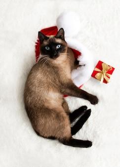 Slapende kat in een kerstman hoed