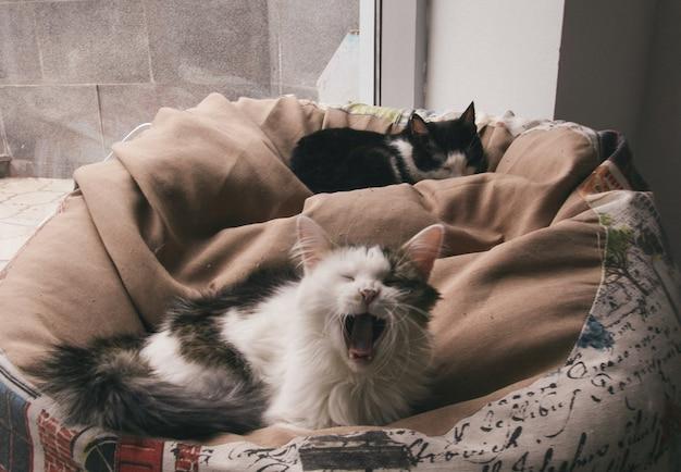 Slaperige katten in hun bed