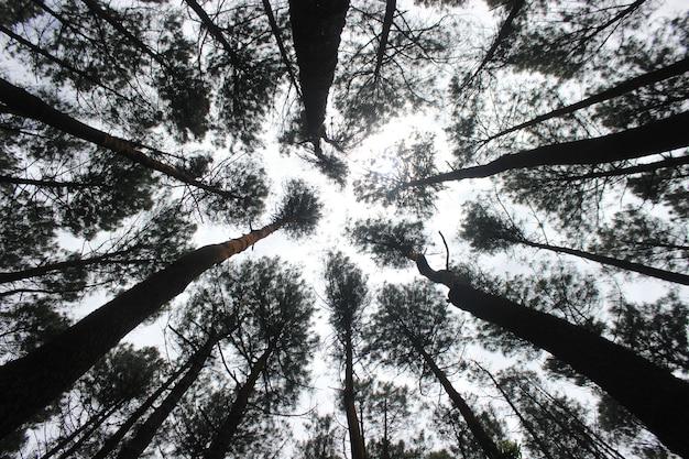 Slecht zicht van bomen