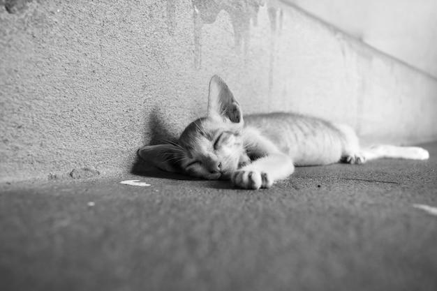 Slechte kittenslaap op vuile grond in zwart en wit