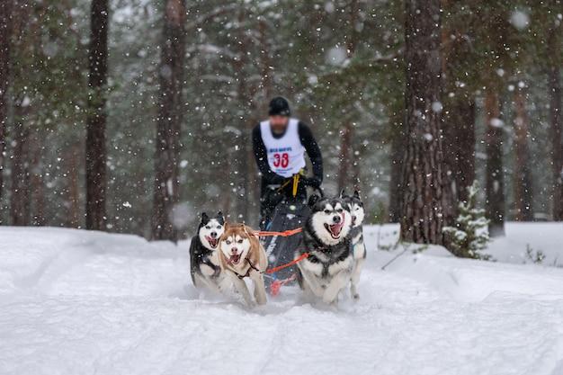 Sledehonden racen. husky sledehonden team trekt een slee met hondenbestuurder. winter competitie.