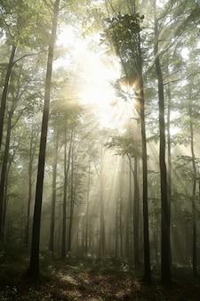 Sleep door een naaldbos tijdens zonsopgang bij mistig weer