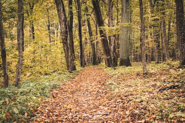 Sleep in het bos op herfstseizoen
