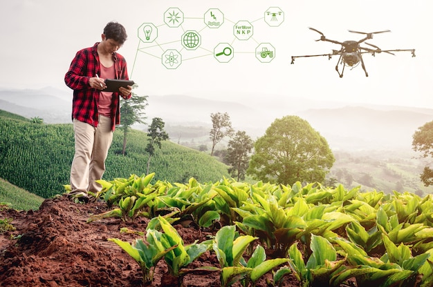 Slimme boer met behulp van technologiecontrole landbouw droneteelt vlieg om kunstmest of insecticiden op de velden te sproeien. industriële landbouw en slimme landbouw dronetechnologie slimme boerderijconcept.