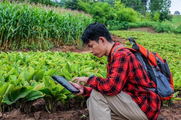 Slimme boer of agronoom die een technologie-app gebruikt, een tablet die de groei-analyse controleert per tablet op het gebied van landbouwlandbouw