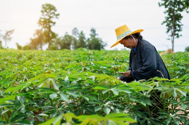 Slimme de landbouwerstablet die van de vrouwenlandbouwer zich op maniokgebied bevinden voor het controleren van haar maniokgebied. landbouw en slimme boer succesconcept