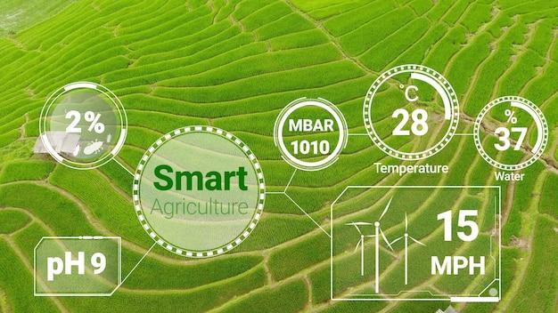 Slimme digitale landbouwtechnologie door futuristisch beheer van sensorgegevens door kunstmatige intelligentie om de kwaliteit van de groei en oogst van gewassen te beheersen. computerondersteunde plantage groeien concept.