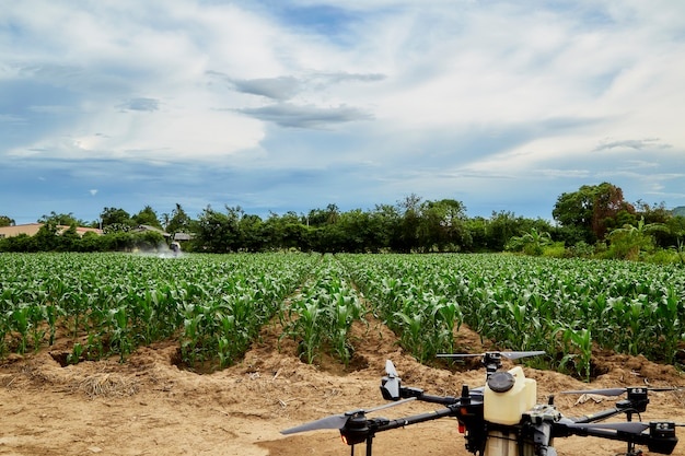 Slimme landbouw landbouwdrone vliegt om op maïsvelden te spuiten, boeren spuiten insecticiden met landbouwdrones