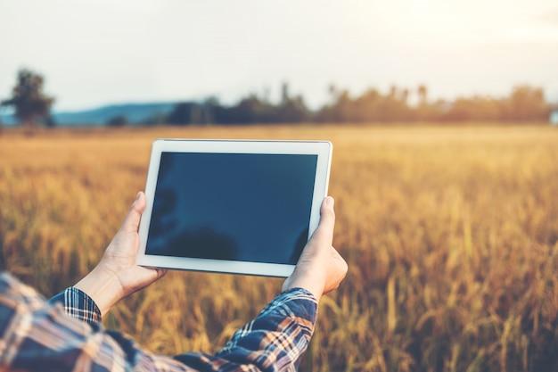 Slimme landbouw landbouwtechnologie en biologische landbouw vrouw die de onderzoekstablet gebruikt en de ontwikkeling van rijstvariëteiten in rijstvelden bestudeert