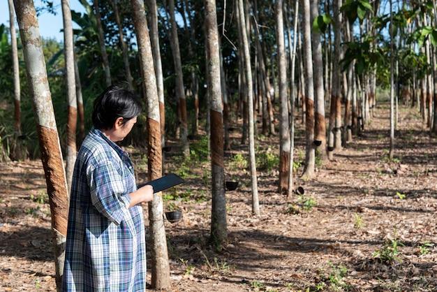 Slimme landbouwer landbouwer rubberboomaanplanting