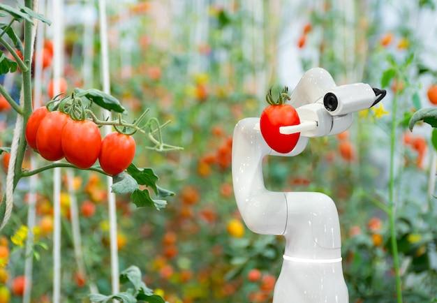 Slimme robotboeren tomaat in landbouw futuristische robotautomatisering om de efficiëntie te verhogen