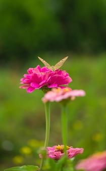 Sloot vlinder op bloem - bloemoppervlak vervagen.