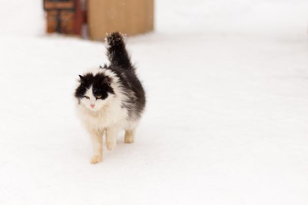 Slordige kat in de sneeuw