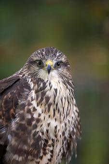 Sluit adelaar op tak in bos