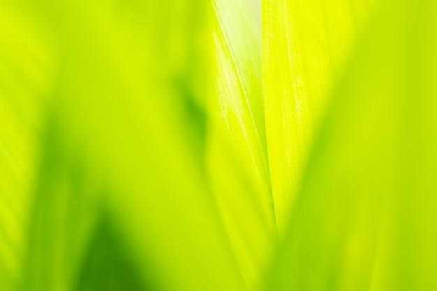 Sluit bladeren omhoog groene kleur en vage groenachtergrond in aard groen blad vers concept