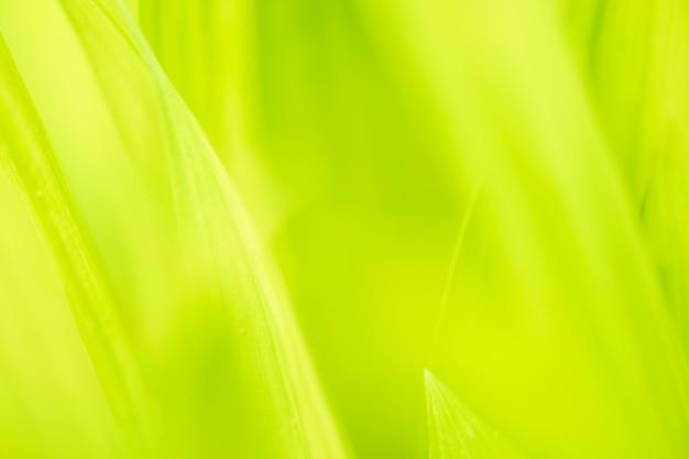 Sluit bladeren omhoog groene kleur en vage groenachtergrond in aard