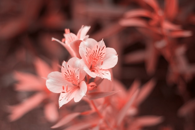 Sluit bloemen gestemd in het leven koraalkleur