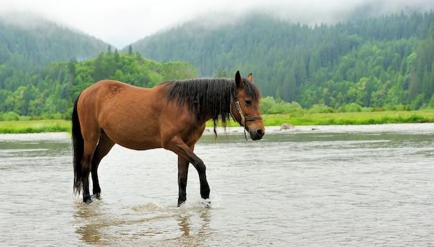 Sluit bruin paard in bergrivier